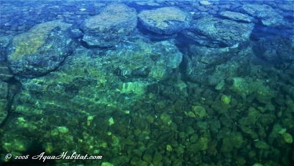 Pond Liners: Lake & Pond Biologists talk pond liners design
