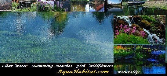 Farm Pond Construction Fishing Pond Design Tips By Biologists For Fishing Farm Ponds Lakes